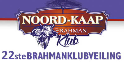 NOORDKAAP Brahman klub